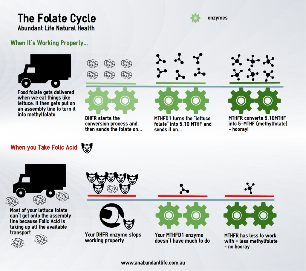 MTHFR Folate Cycle Infographic
